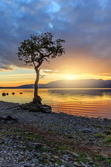 The Lone Tree at Sunset (MilesGrayPhotography (AnimalsBeforeHumans)) Tags: autumn britain bay milarrochybay canon 6d 1635 ef1635mmf4lisusm dusk eos ef europe evening f4l glow iconic landscape lens loch lochlomond lonetree milarrochy milarrochytree nighfall outdoors photography tranquil reflections scotland sky scenic sunset twilight tree trossachs uk unitedkingdom waterscape wide westhighlandway