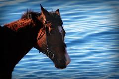 .....horse to sea (52picchio) Tags: 2016 dicembre canoneos60d campania cilento canon castellabate santamariadicastellabate spiaggia fluidrexplored flickrnova flickrclickx flickr fluidr explore explored