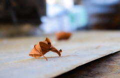 Get Low (Leitratista) Tags: lovephotography hobby lowangle photoassignments leaves dof 1855mmafpvrkit kitlens nikkor nikond3400 manualmode learnphotography leaf