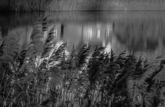 The house reflections (Coisroux) Tags: reflections houses rivers forests urban grasses waterbank water grey monochrome shining calm stream cityscape nature