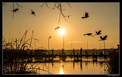 Sunset Flyout
