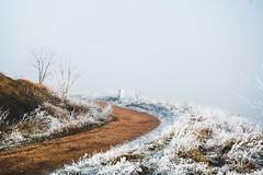 frost walk (lina zelonka) Tags: budenheim rheinhessen germany linazelonka rheinlandpfalz rlp rhinelandpalatinate frost december dezember winter path trail walk fog foggy nebel nature europe europa deutschland nikond7100 18105mm