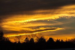 End of Day (Karen_Chappell) Tags: sunset black orange clouds sky nfld newfoundland weather bowringpark park trees silhouette stjohns canada atlanticcanada avalonpeninsula evening scenery scenic landscape