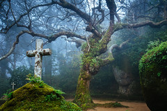The Tree of the Capuchos (J C Mills Photography) Tags: conventodoscapuchos sintra portugal convent enchanted magical trees mist fog rocks moss