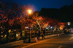 _DSC8969 (*嘟嘟嘟*) Tags: 台中 泰安 山櫻花 櫻花 警察局 taiwan