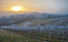 Zagorje (26) - frost (Vlado Ferenčić) Tags: frost winter zagorje hrvatskozagorje hrvatska croatia nikond600 nikkor357028