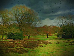 A time to gather (Jan 130) Tags: spring heathland crows gatheringofcrows trees topaz texture geotagged awardtree