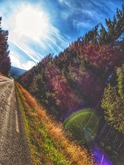 Driving peacefully. (MSamir63) Tags: lumix panasonic fz200 lights sun perspective awesome hdwallpapers road sapin roadtrip auvergne nature driving colorful