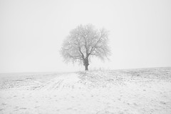Frozen (Philippe Saire || Photography) Tags: canon eos 5d mark iii ef 1740mm f4l usm nature paysage landscape champs field meadow campagne neige snow froid cold hiver winter lisle suisse switzerland swiss schweiz brume brouillard fog mist haze light lumiere arbre tree atmosphere photo photography fullframe ff pleinformat philippesaire