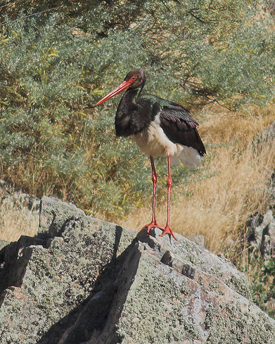 III Expedio de Digiscoping Monfrague-Espanha