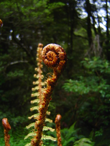 Fern frond on the West Coast of New Zealand / シダ