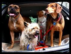 Fen The Dog Taxi by Fen Branklin