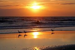 Sunset over Northsea (imanh) Tags: sea sunset imanh iman heijboer northsea seagull noordzee beach strand zee meeuw zonsondergang towalkbytheeveningsea