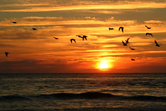 Home to roost (Chrissie64) Tags: sunset seascape nature landscape ilovenature interestingness flickr explore exploreinterestingness explored 250v10f
