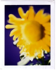 sunflower (patGRAHAM melanieSTANDAGE) Tags: family flowers friends light music usa hot london love dogs america fun polaroid happy washingtondc europe icons remember air before together instant dates space1026 prior stevedore 1000photos transformergallery pastperfect patgraham 96gillespie melaniestandage grahamstandage
