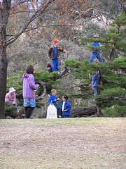 Tree Climbing at Tharwa School