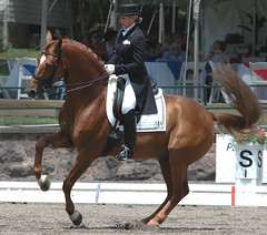 USET Dressage Festival of Champions (Rock and Racehorses) Tags: nj gladstone dressage usef