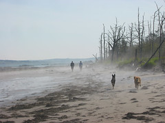 Meeting in the mist (Hodgey) Tags: ocean people mist beach dogs fog run deadtrees