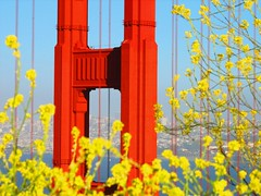 headlands spring (pbo31) Tags: sanfrancisco california park bridge flowers orange flower color nature northerncalifornia yellow catchycolors garden season ilovenature 1 bay flora crossing seasons cross marin grow favorites growth 101 highway1 pacificocean goldengatebridge goldengate bayarea bloom marincounty sanfranciscobay pollen sneeze us1 blooming northbay thegoldengate thegate ggnra goldengatenationalrecreationarea coastalhighway famousbridge famousbridges historicbridges