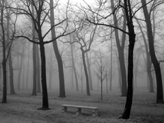 In assenza - Conspicuously absent (gualtiero) Tags: trees winter blackandwhite bw italy parco fog alberi bench europa europe italia creativecommons parma leafless nebbia inverno biancoenero panchina parcoducale senzafoglie dwcffbw