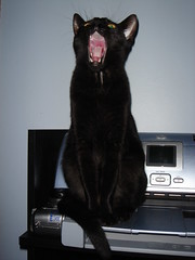 Little Skittle (Kimberly207) Tags: black cat kitten singing little yawn bored kitty boring skittle yawning