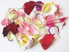 Darshan Flowers