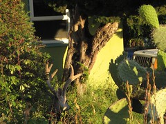 IMG_0757 (robertbarrer) Tags: deer elcerrito