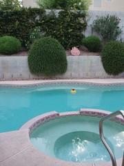 pool (awesome austin) Tags: lasvegas