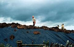 cutting peat (Ireland) (elfis gallery) Tags: street ireland irish dog man dogs publicspace work landscape island irland loveit peat farmer lovely todolist irelandandscotland bilderfantasien irishisland