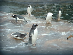 holiday water zoo penguins scotland edinburgh