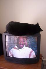 hey, he's on tv! (djzealot) Tags: sleeping television cat tv kitten nap catnap sleepy tuxedo