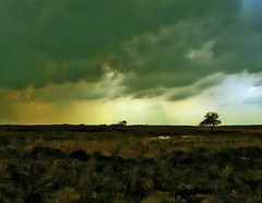 Dark clouds pass the Dutch moors (sole) Tags: light sky holland tree art nature dutch clouds dark landscape europe flickr foto 500v20f moors drenthe solea melancolic