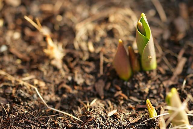 Spring '05 Macros - 1