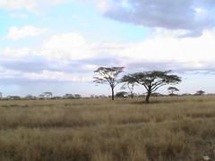 safari002