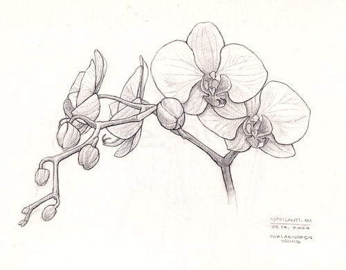 Orchid Line Drawings http://desimad.com/js/black-and-white-orchid-drawing&page=3