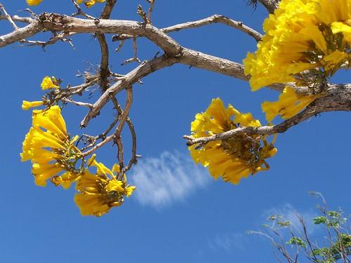 Susurro de flores