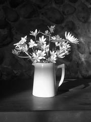 Chapel Jug (ScaryLily) Tags: flowers bw white suffolk chapel jar jug bulbs bouquet unknownflower scarylily 1sept0697 foundinthegraveyard