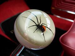 Redback Spider on Gear Knob (luns_spluctrum) Tags: show red spider interestingness interesting fuji farm country finepix s5000 fujifilm pontiac essex fujifinepix redback barleylands