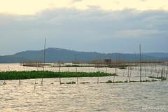 Baklad @ Laguna Lake (RPG - Photography) Tags: lagunalake baklad rizalphilippines