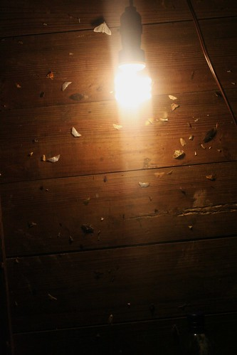 Moths on the wall