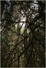 göhl 80 (beauty of all things) Tags: creek belgium bach scrub belgien geul gestrüpp hergenrath göhl gestrypp lagueule