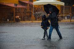 Animo nature sous un  déluge !!!
