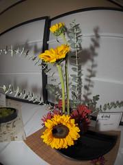 """Sunflower, Mum & Yuukori leaves by Emiko Unno """"Koryu School"""" (nano.maus) Tags: fisheye lauritzengardens japaneseflowerarrangement omahabotanicalsociety japaneseambiencefestival"""