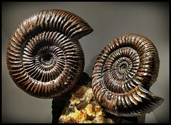 The World's Best Photos of ammonite and texas - Flickr Hive Mind