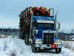 Straight outtta the bush (jr-transport) Tags: tree pine logs logger length spruce oversize kenworth w900l tagaxle trailex