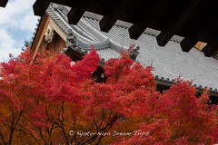 Chion-in in Kyoto, Founded in 1234 in Honour of Hōnen. (KyotoDreamTrips) Tags: autumn kyoto buddhism chionin 知恩院 tokugawaiemitsu 徳川家光 hōnen 法然