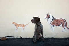 The Senceca Welcome Committee (MilkaWay) Tags: dog cat mural southcarolina birddog tessa 7yearsold gsp seneca oconeecounty germanshorthairedpointer vetclinic sc28 littledoglaughedstories