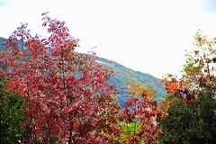 Greece is... (sifis) Tags: color landscape nikon greece land 2470 sakalak d700