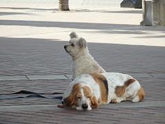 Mates (Karen Pincott) Tags: dogs mates newzealand napier waiting patient wellbehaved