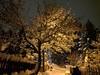 Back Alleys of Rossland (Dru!) Tags: